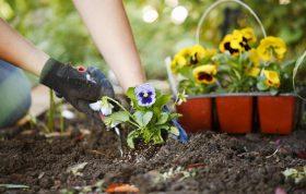 هدیه برای عشق گل و گیاه